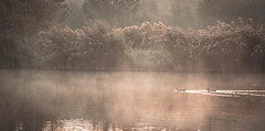 Misty Painting (vicorven) Tags: sunrise duck scene scenery morning early bright gold mist fog pond new nikon nikkor life good feeling nature natural misty