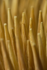 Toothpicks (fingerprints1148) Tags: toothpicks wooden macro