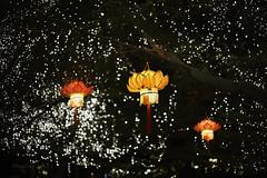 Happy Mid Autumn Festival~ (Angeline Goh) Tags: tanglung lotus lotustanglung lotusflower nightscene lights desaparkcity sonya7r a7r voigtlander ultron vintageline 35mm happymidautumnfestival midautumnfestival    bokeh bokehlicious