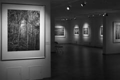 Rasputin in the forest :) (Alexey Subbotin) Tags: monochrome blackwhite exhibition 400 ilford contaxiia фотограф jupiter8m christopherburkett