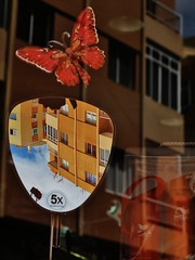 Orange (Tenerife) (Seigar) Tags: animal lalaguna tenerife isla theblueheartbeat urban reflection reflejo urbano orange naranja maripo