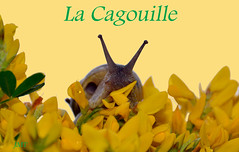 la cagouille (Jean-marc17340) Tags: art nature animal composition pluie escargot mto intempries cagouille blinkagain naturemai