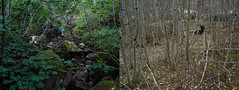woodland stories (Lise Utne) Tags: diptych liseutne featuredataamoracom