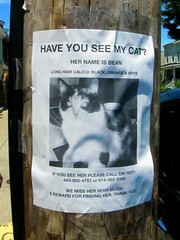 Bean is Lost in Hampden! (Star Cat) Tags: cat maryland baltimore bean hairspray beehive hampden lostcat hon honfest bawlmer honfest2012
