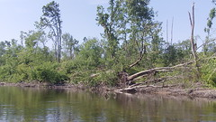 109_2067 - Copy (Dave Garvin) Tags: trip river canoe damage tornado huron