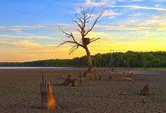 Medusa's Lair (Kansas Poetry (Patrick)) Tags: baldeagle drought eaglesnest clintonlake patrickemerson 400road patricknancydolightingtoday