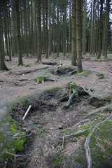 Bois Jacques forest (Jason Dawson 2010) Tags: tank ardennes battle offensive sherman panzer bulge bastogne easycompany 506thpir 101stairborneboisjacquesforest