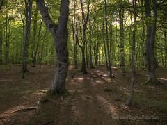 Woodland Sunset (Cameron Richardson) Tags: trees summer sun tree forest woodland four scotland highlands scottish olympus 43 sunet thirds e510 wpnature
