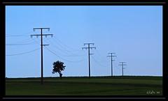 Electric Cable (Lutz Koch / away) Tags: tree electric germany landscape deutschland wire hessen pentax transport cable pole pylon mast nassau landschaft taunus strom baum idstein k7 stromleitung überlandleitung electriccable idsteinerland elkaypics elactricity elacktrizität