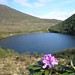 Bloom over Bay Lough