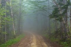 Low Visibility (Jim Boud) Tags: asia jamesboud jimboud landscape mirrorless nex nex7 russia sakhalin sakhalinoblast sony sonynex7 travel yuhzno yuzhnosakalinsk fog foggy forest mysterious path trees южносахалинск