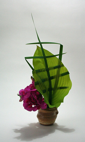 Sweetpeas with manipulated hosta leaf