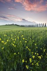 path to tranquility (Susu_tD) Tags: morning sunrise san val tuscany pienza toscana cypresses toskana dorcia orcia quirico