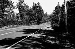 Iversen Road - Nikon FM - Nikkor-SC 55mm F/1.2 - Efke 25 (divewizard) Tags: california blackandwhite bw white black slr blancoynegro film blanco analog 35mm blackwhite analgica nikon noir noiretblanc negro 55mm 25 fm blanc f12 pelcula efke mendocinocounty nikonfm efke25 schwarzundweiss blackwhitephotos oldstageroad y44 nikkorsc ncps chrisgrossman 55mmf12sc northcoastphotographicservices nikkorsc55mmf12 nikkorsc nikkorsc55mmf12 iversenroad