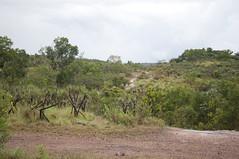 _DSC2403-- (CAUT) Tags: trip viaje southamerica creek river nikon colombia meta july paseo julio 2012 cao cristales d90 amricadelsur lamacarena serrana serranadelamacarena caut nikond90 caocristales