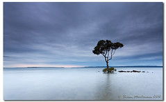 Simplicity (danishpm) Tags: ocean seascape beach clouds canon sigma australia wideangle brisbane queensland aussie aus 1020mm mangrovetree sigmalens southeastqueensland eos450d sorenmartensen 06ndsoftgrad hitechgradfilters
