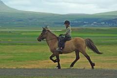 Le cheval islandais. (PierreG_09) Tags: cheval iceland islandia islande faune