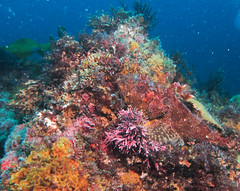 Cabazon (Ed Bierman) Tags: scuba diving marinelife ncrd gaydiving