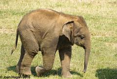 (Joan Hagan 70000k+ views. Thankyou :-)) Tags: quality animals zoo zooanimals zsl zoouk d7200 dunstable dx sigma safari england vr f3563g joanhagan jhagan july2016 nikon nikonsigma50500mm nikon7200 nikkor