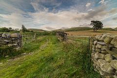 Path to the Foothills (PSHiggins) Tags: nikon d610 fx samyang 14mm fullframe rachub llanllechid bethesda pine scots gate gates