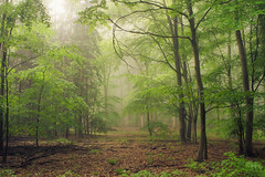 Mists of Time (Netsrak) Tags: rheinbach nordrheinwestfalen deutschland de eifel nebel mist fog misty foggy neblig tree trees baum bume wald forst forest woods leaf leaves blatt bltter nature natur green grn red rot light licht shadow schatten farben colors