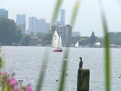 Vogel en boot (michieljacker) Tags: rotjeknor rotterdam lake kralingseplas bird boot sail sailboot skyline nederland holland dutch thenetherlands
