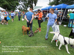 DAT2016_Crowd_1176 (greytoes_99) Tags: agility dat2015 dat2016 event humanesocietytacoma people summer tacoma tacomahs volunteers dog humananimalbond cat lakewood wa us