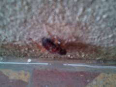 bug 3 (krihsnasri) Tags: bug hemiptera arthropod insect myriapod woodlouse terrestrialcrab pathogen slipperlobster trilobite