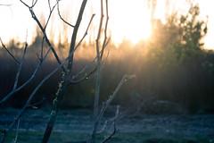 SUNSET (Eliecer Gallegos) Tags: landscape chile walking sunset