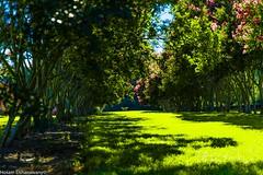 DSC_0578 (hosam alshanawany) Tags: lr lightroom nature norfolk va usa botanical garden d750 nikon nikkor 2485 af