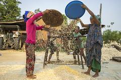 Farmers winnowing maize in Rambasti, Kanchanpur. (CIMMYT) Tags: nepal csisa cimmyt maize agriculture smallholder farmer mechanization asia