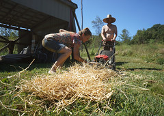 chopping straw with lawnmower (The Year of Mud) Tags: theyearofmud naturalbuilding cob clayplaster lightclaystraw berea kentucky southslopefarm