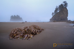 i s o l a t i o n  0354 (Philip Esterle) Tags: washington philipesterle pacificocean seas landscapes pacificcoast naturephotography clouds hdr summer beach waterscapes skyscapes skies landscapephotography scenic pentaxk1 sunrise fog seastacks olympicnationalpark forestscapes secondbeach beaches oceans olympicnps olympicpenninsula pacific ricohpentax woodlands dawn fingolfinphoto mist seascapes forks unitedstates us