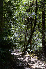 Trail Near Willits (rschnaible) Tags: willits california northern west western us usa skunk train woods outdoors sightseeing tour tourist trail hike