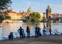 Veer u Vltavy (Honzinus) Tags: vltava river praha prague cz czech esko praga prag msto evening veer z labut swan nplavka