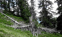 Alps (siglinde m) Tags: alps