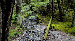 Riverbed (leyannmeau) Tags: nature natural strathconapark beautiful turtleisland