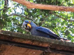 """Le Parc des Oiseaux d'Iguaçu: la grande volière aux perroquets <a style=""""margin-left:10px; font-size:0.8em;"""" href=""""http://www.flickr.com/photos/127723101@N04/29642953725/"""" target=""""_blank"""">@flickr</a>"""