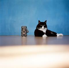 Cat and camera (C.Kunta) Tags: 6x6 120  hasselblad500c iso80 kodakppn160 slr cat himi skogkatt