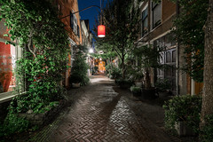 Urban Jungle (McQuaide Photography) Tags: haarlem noordholland northholland netherlands nederland holland dutch europe sony a7rii ilce7rm2 alpha mirrorless 1635mm sonyzeiss zeiss variotessar fullframe mcquaidephotography lightroom adobe photoshop tripod manfrotto light licht night nacht nightphotography stad city urban lowlight architecture outdoor outside illuminated street straat kortehoutstraat backstreet window wideangle wideanglelens groothoek building longexposure cobblestone cobbled streetlight lantern shade shadow vijfhoek atmosphere lighting tree boom narrow pedestrian nocars nopeople