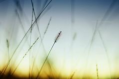 Bokeh (Francine de Mattos) Tags: sunset nature colors bokeh details luznatural francinedemattos fotografeumaideia