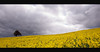 One Tree Hill (djshoo) Tags: england sky clouds landscape catchycolours sigma wideanglelens d90 nikond90