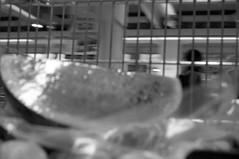 REfoto_Darkroom_15 (lostinthesupermarket2012) Tags: darkroom blackwhite ilford biancoenero refoto reggioemilia cameraoscura lostinthesupermarket