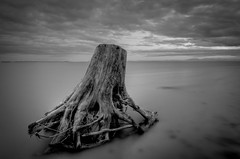 Driftwood (Alan Drake) Tags: ocean light blackandwhite bw beach water clouds sand nikon wideangle driftwood d7000