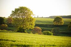 springtime (Dennis_F) Tags: trees sunlight tree field zeiss licht spring dof sony feld fields fullframe dslr bäume baum frühling 135mm kraichgau 13518 a850 sonyalpha sonydslr vollformat cz135 zeiss135 dslra850 sonya850 sonyalpha850 alpha850 sony135 sonycz135
