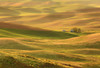 Lemon Lime (Aaron Reed Photography) Tags: light green photography spring waves photographyclass photographers velvet hills workshop stockphotos stockimages palouse professionalphotography blackwhitephotography easternwashington palousehills photographyschool fineartphotographs skyphotographs lakephotographs aaronreed naturephotographs abstractphotographs landscapephotographs photographytraining framedartprints sunsetphotographs artphotographs sunrisephotographs aaronreedphotography surrealphotographs redphotographs waterphotographs cityscapephotographs cloudsphotographs duskphotographs reflectionphotographs exposurenorthwest bluephotographs aaronreedphotographer landscapephotographygallery mountainsphotographs orangephotographs pavementphotographs whatislandscapephotography whatisstockphotography aaronreedart aaronreedprints aaronreednature aaronreedaluminumartprints yellowphotographs bridgephotographs buildingsphotographs twilightphotographs roadphotographs aaronreedmetalprints aaronreedacrylicfacemountprints