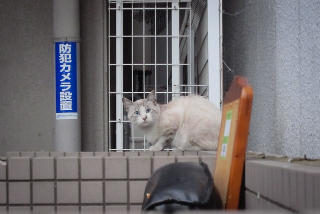 Today's Cat@2012-05-27