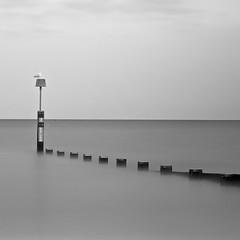 bournmouth groyne mono (johnnypugsley) Tags: wood longexposure sea sky blur bird beach soft gull groyne bournmouth johnnypugsley