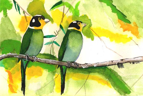 Long-Tailed Broad Bill - Original Watercolor
