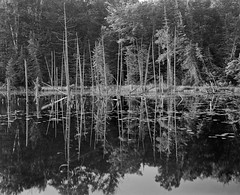 O'Neil Lake Reflections (mat4226) Tags: trees blackandwhite bw white black reflection tree film nature water lens natural michigan naturallight dot 8x10 reflect hp5 eastman pyro ilford largeformat oa obsidian filmphotography pyrocat goerz filmisnotdead biggerisbetter 8x10film 14red puremichigan stainingdeveloper eastmancommercialb compensatingdeveloper dilutedeveloper obsidianaqua artarreddotartarf9355mmzone systemnlakelake oneiloneilf64calmstilldeadstandard